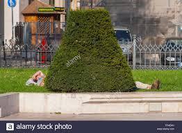 nap ornamental hedge budapest hungary stock