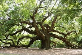 interpretation of a in which you saw oak