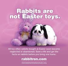 bunnies for easter rabbits are not toys for easter spread the word sign or