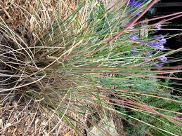 180 best grasses images on grasses plants and free