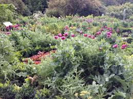 learn to how to create a potager a french kitchen garden