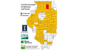Counties In Illinois Map by Researchers Confirm New Corn Disease In Illinois Chicago Tonight