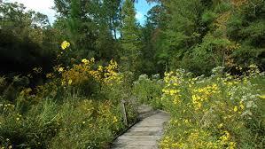 Raleigh Botanical Garden Carolina Botanical Gardens Raleigh Durham Wheretraveler