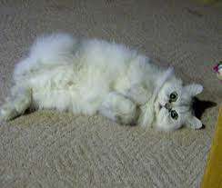 Cute Cat Meme Generator - cute cat meme generator captionator caption generator frabz