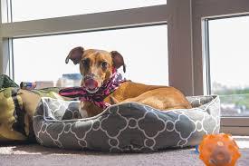 Washable Dog Beds Best Washable Dog Beds Buyer U0027s Guide U0026 Reviews 2018
