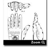 patent drawings trademark illustrating services drafting samples