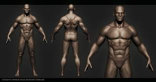 Human Anatomy Diagram Download Human Anatomy Diagram Human Male Anatomy Interesting For Study