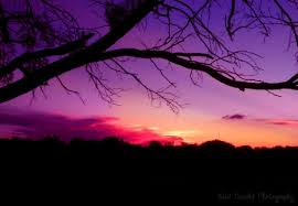 sunsets branches purple silhouette sunset trees hd