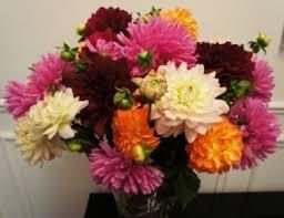 fresh cut flowers fresh cut garden dahlias vase arrangement in port stanley on