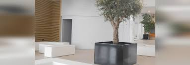 tree tub for indoor image in atelier so green