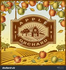 apple orchard editable vector illustration stock vector 113615440