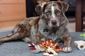 american eskimo dog cost in india esa dog archives mooshme