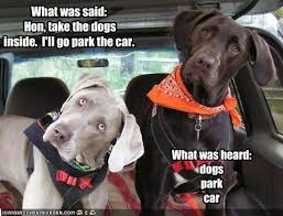 Dog In Car Meme - i has a hotdog cars funny dog pictures dog memes puppy