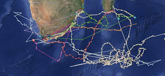 tagging and tracking the great white sharks of south africa htxt