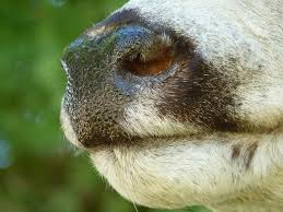 wenner wildlife studio taxidermy roswell mexico mule deer