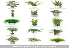 low light plants for office low light office plants home design
