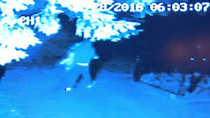 grinch steals christmas decorations off lowell lawn cbs boston