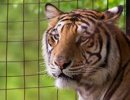 tiger adventures circus world baraboo