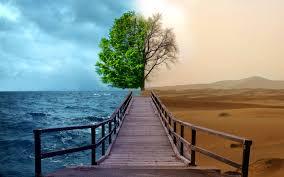 tree in seasons artstudies