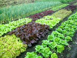 Buy Soil For Vegetable Garden by How To Test Your Garden Soil U0027s Ph And Fix It For Great Veggies