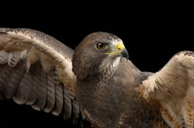 how injured birds get new feathers u2014it may surprise you