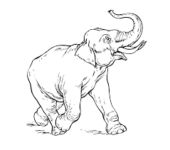 elephant running coloring page gif 1110 bestofcoloring com