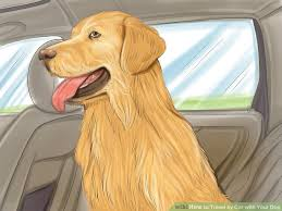 Wisconsin traveling with pets images How to travel by car with your dog 15 steps with pictures jpg