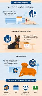 dino vite reviews hip dysplasia in dogs causes treatment more