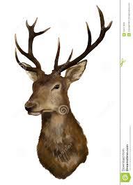 deer head deer head stock illustration illustration of hooves 24417849