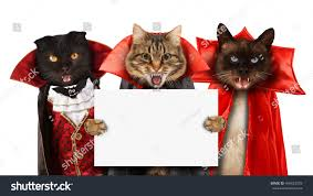 blank halloween background funny cats celebrating halloween wearing suit stock photo