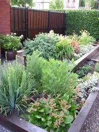 kitchen gardening tips archives garden trends