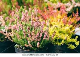 flowers store near me flower plant store in bloom creative florists flower plant