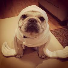 Halloween Costumes English Bulldogs Ready Halloween French Bulldog Seal Costume