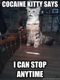 Cat Cocaine Meme - cocaine kitty says i can stop anytime cocaine kitty quickmeme