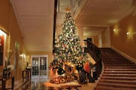 the most beautiful trees in hotels luxury topics luxury