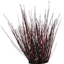 lovelypubichair com red twig dogwood for centerpieces such a vibrant red color and