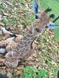 november birth animal jacksonville zoo zooborns