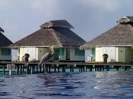 luxury resort life in the maldives chaaya reef u0026 ellaidhoo by