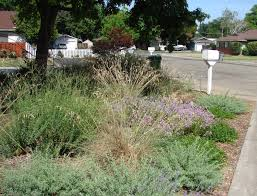 california native plant garden design services offered by eve u0027s garden design chico ca eve u0027s garden
