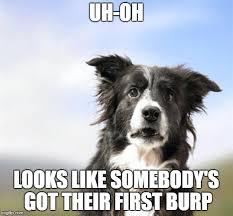 Border Collie Meme - surprised border collie meme generator imgflip