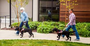 How Does A Guide Dog Help A Blind Person Guide Dogs For The Blind Apply To Gdb