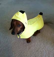 Weiner Dog Halloween Costumes Doesn U0027t Love Dogs Costumes Stay Tuned Costume