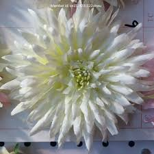 White Roses For Sale Online Get Cheap White Roses For Sale Aliexpress Com Alibaba Group