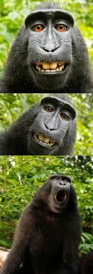 Monkey Meme Generator - bad pun monkey meme generator imgflip