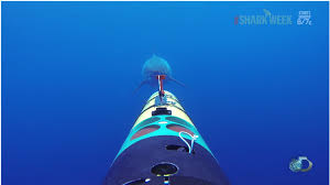 the shark tracking camera that kept rolling when a great white