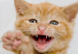 when do puppies and kittens lose their baby teeth