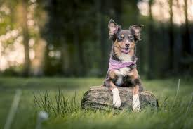 Side Effects of Keppra for Dogs