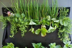 Herb Garden Planter Ideas by Garden More Design Indoor Herbs Garden Ideas As One Of The