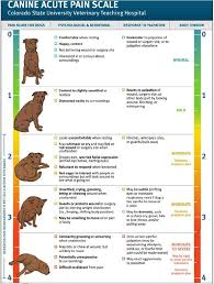 belgian sheepdog growth chart 186 best images about dogs we love loving your dog on pinterest