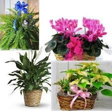 online flowers kirchers flowers florist in defiance ohio oh ohio online